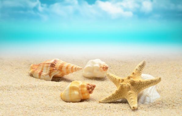 Картинка песок, море, волны, пляж, берег, ракушки, summer, beach, sea, blue, sand, starfish, seashells