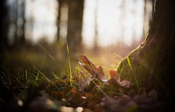 Картинка осень, лес, трава, листья, макро, природа, фото, фон, дерево, обои, мох, растения, wallpapers