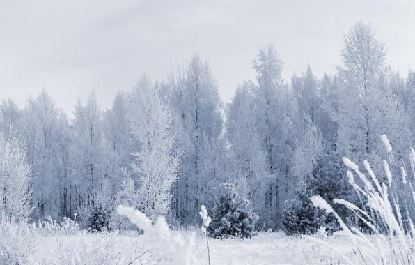 Картинка иней, лес, снег, деревья, Зима