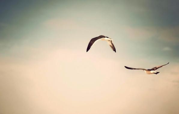Картинка небо, полет, птицы, природа, фото, фон, обои