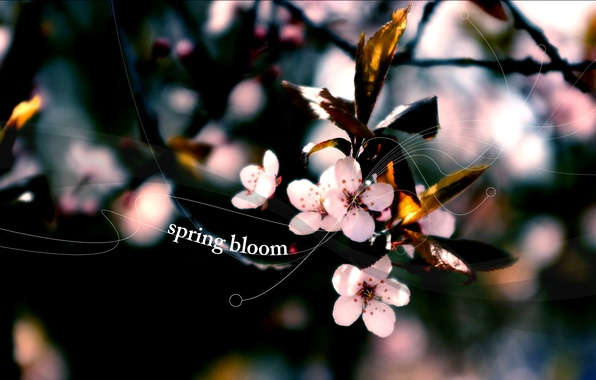 Картинка цветы, природа, вишня, растения, весна, лепестки, бутоны, цветение