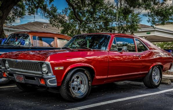 Картинка красный, классика, 1971 Chevrolet Nova, Chevrolet Nova