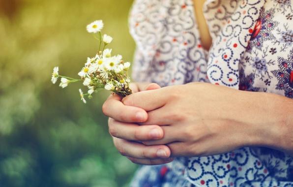 Картинка лето, девушка, солнце, свет, цветы, настроение, цвет, ромашки, растения, руки, кофта