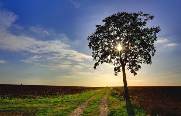 Картинка дорога, поле, дерево, Природа