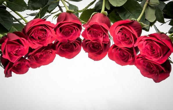 Картинка отражение, фон, розы, бутоны