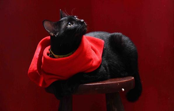 Картинка кошка, кот, фон, черный, салфетка, табурет