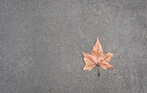 Картинка дорога, лист, фон