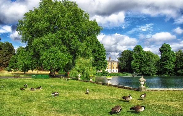 Картинка зелень, небо, трава, облака, деревья, птицы, пруд, парк, газон, Англия, Лондон, утки, скамейки, Kew Gardens