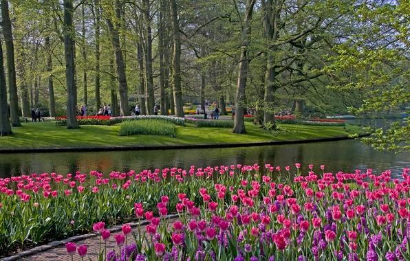 Картинка трава, деревья, цветы, пруд, парк, тюльпаны, Netherlands, Keukenhof, Lisse