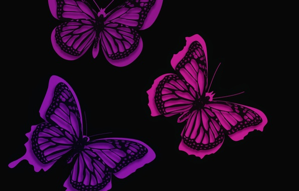 Картинка линии, фон, узор, бабочка, краски, мотылек