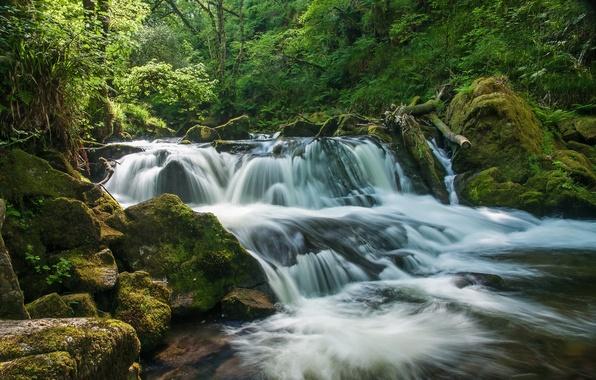 Картинка лес, река, Англия, водопад, каскад, England, Корнуолл, Cornwall, River Fowey, Golitha Falls