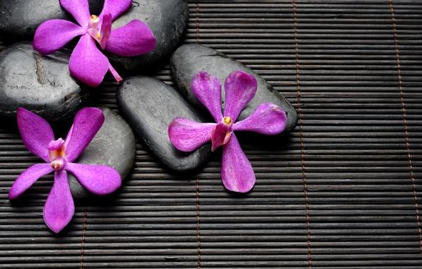 Картинка цветы, камни, black, flowers, спа, stones, purple, bamboo, spa, zen