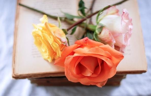 Картинка цветы, розовая, розы, оранжевая, книга, желтая