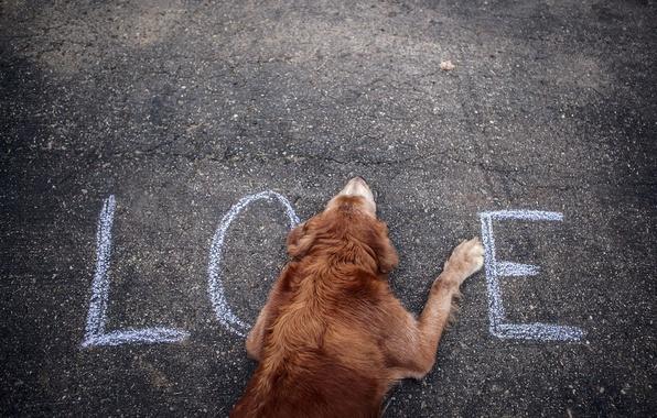 Картинка улица, собака, слово