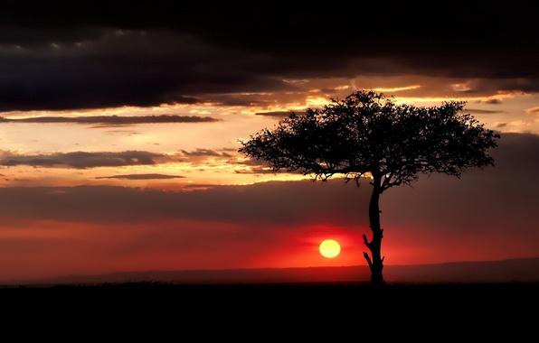Картинка небо, облака, закат, дерево, Солнце