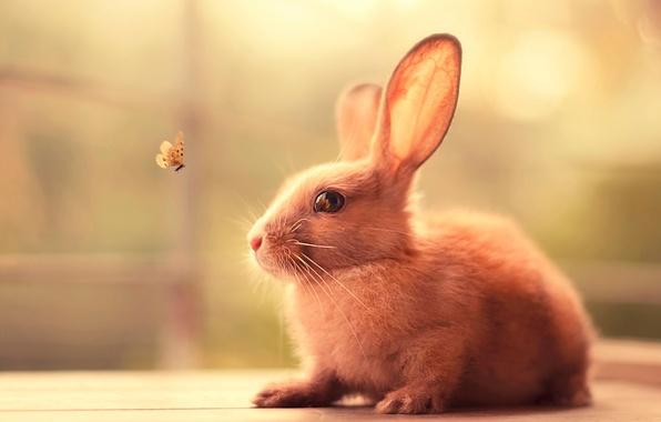 Картинка бабочка, заяц, кролик