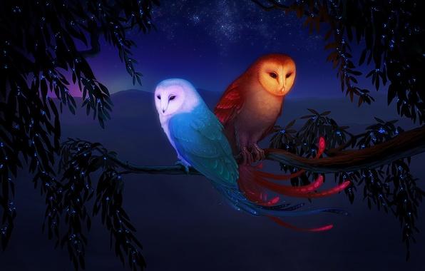 Картинка вода, горы, птицы, фентези, дерево, огонь, стихии, ветка, звёзды, совы