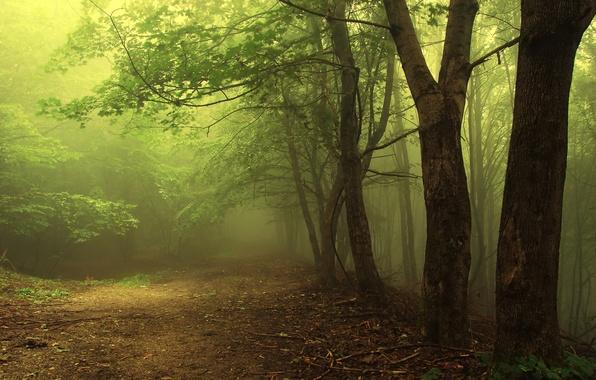 Картинка зелень, лес, листья, деревья, ветки, природа, земля