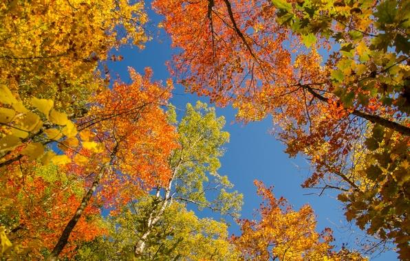 Картинка осень, небо, листья, деревья, крона