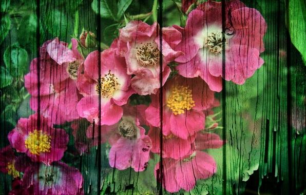 Картинка цветы, стиль, фон, доски
