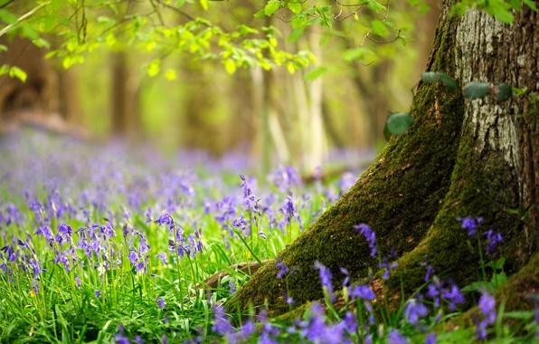 Картинка лес, трава, листья, цветы, дерево, весна, ствол