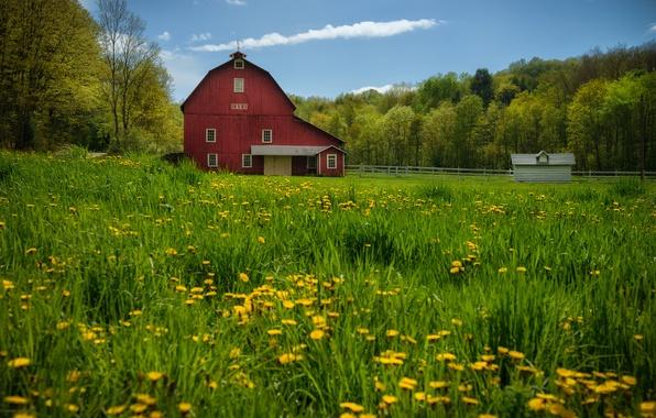 Картинка деревья, луг, сарай, одуванчики, Пенсильвания, Pennsylvania, New Albany, Нью Олбани