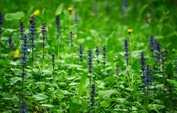 Картинка лес, трава, цветы, природа, поляна, растения, весна, россия