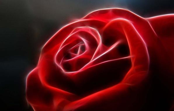 Картинка цветок, красный, роза