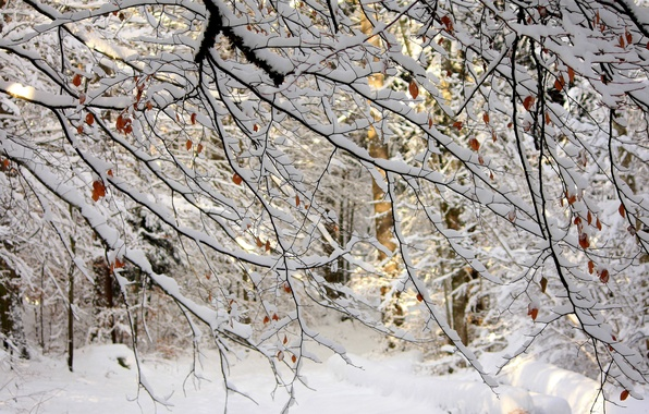 Картинка зима, лес, листья, снег, деревья, ветки, природа