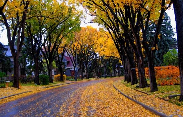 Картинка осень, листья, деревья, природа, city, город, дом, улица, house, архитектура, trees, nature, autumn, leaves, street, ...