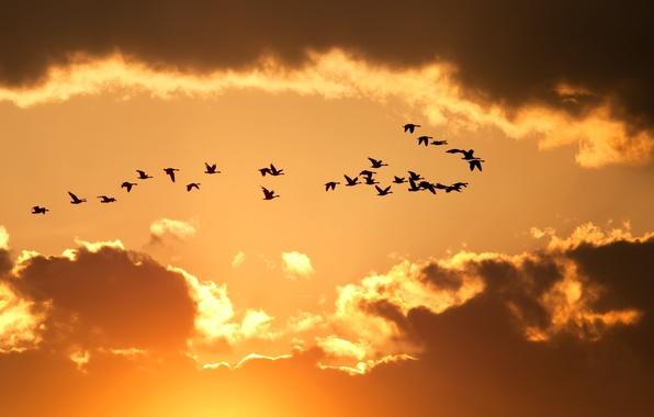 Картинка небо, облака, полет, птицы, желтый, природа, фон, обои, wallpaper, силуэты, широкоформатные, background, полноэкранные, HD wallpapers, …