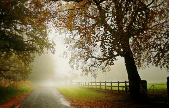 Картинка дорога, осень, деревья, туман, дерево, забор