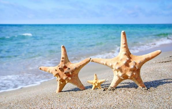 Картинка песок, море, пляж, морская звезда, summer, beach, sea, sand, starfish