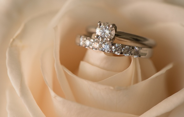 Картинка цветок, роза, кольца, свадьба