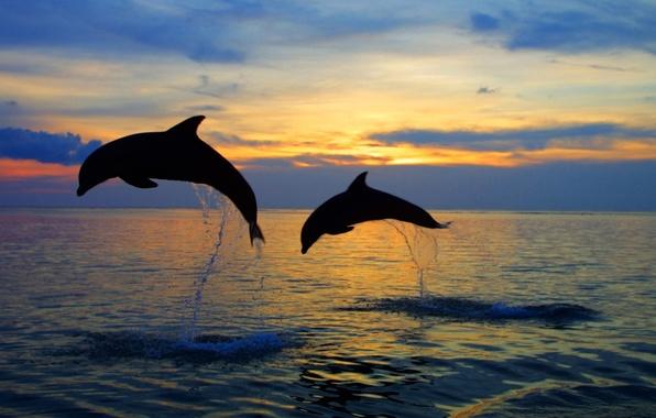 Картинка море, небо, вода, закат, брызги, природа, прыжок, вечер, горизонт, силуэт, пара, дельфины, nature, sunset, боке, …