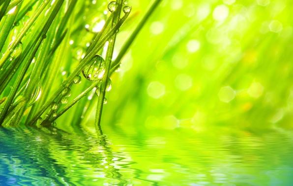 Картинка трава, вода, капли, макро, лучи, природа, роса, утро, блестки