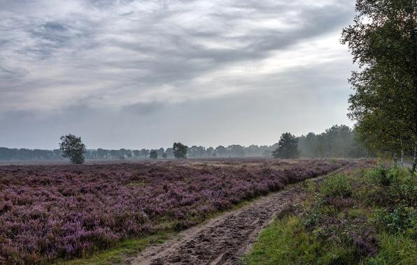 Картинка дорога, поле, лето, пейзаж, цветы, природа