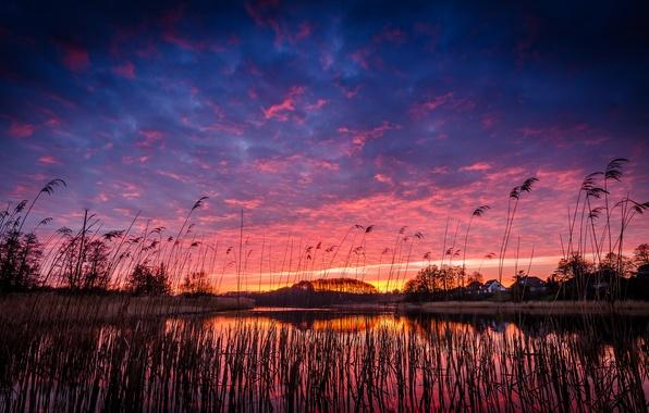 Картинка небо, трава, облака, деревья, закат, оранжевый, озеро, отражение, берег, Вечер, вечер, синее, поселок, малиновый