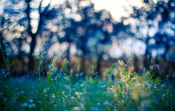 Фото обои боке, деревья, трава, поле, стебель