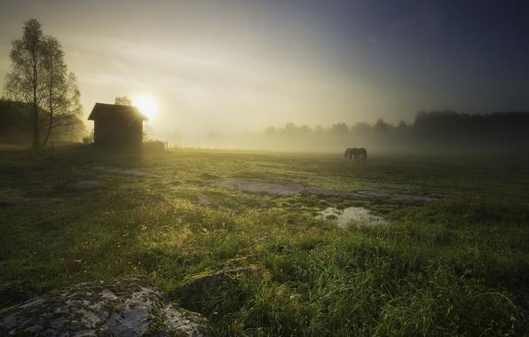 Картинка поле, пейзаж, природа, туман, дом, кони, утро