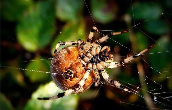 Картинка макро, макросъемка, пауки