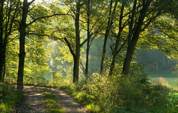 Картинка зелень, лес, солнце, деревья, Германия, Бавария, тропинка
