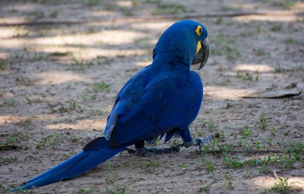Картинка птица, краски, перья, клюв, попугай, хвост