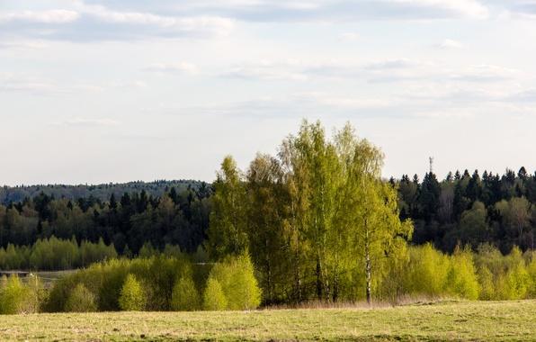 Картинка зелень, лес, деревья, весна, утро, май, зеленое, солнечно