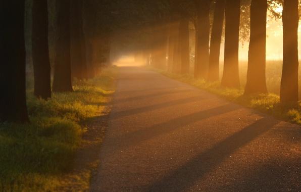 Картинка дорога, асфальт, свет, деревья, природа, дерево, стволы, листва, дороги, аллея, красивые обои, аллеи