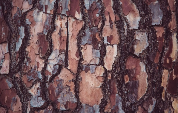 Картинка дерево, текстура, кора