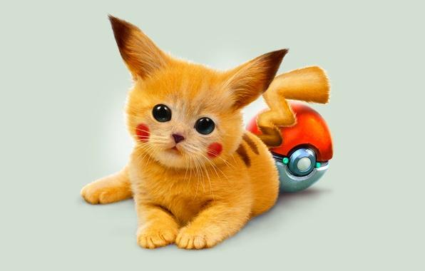 Картинка глаза, котенок, арт, рыжий, покемон, Пикачу