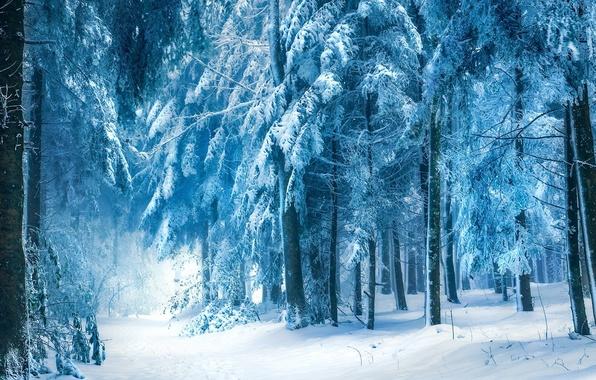 Картинка зима, снег, деревья, Лес