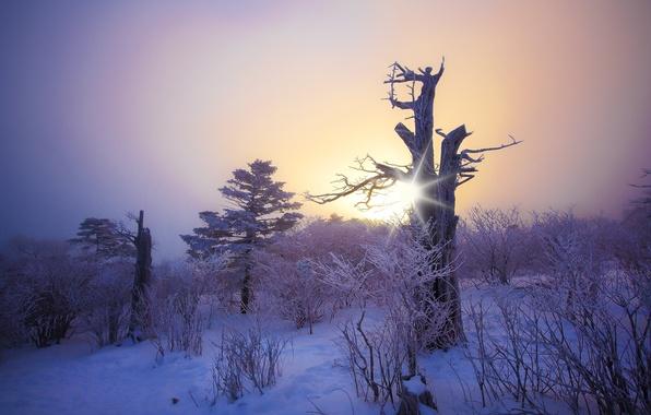 Картинка иней, лес, солнце, снег, деревья, закат, дерево, Зима, красота, мороз, коряга, forest, сумерки, twilight, кусты, ...