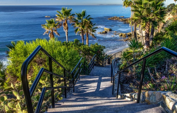 Картинка море, камни, пальмы, побережье, спуск, горизонт, Калифорния, лестница, ступеньки, США, Laguna Beach